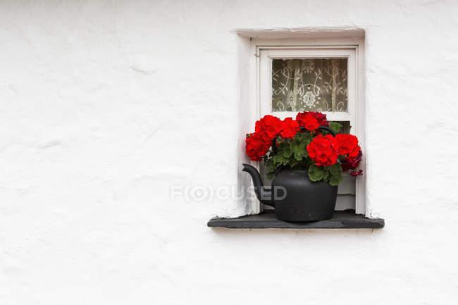 Nahaufnahme von roten blüten — Stockfoto