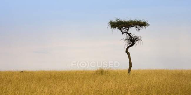 Masai Mara, Kenya — Stock Photo