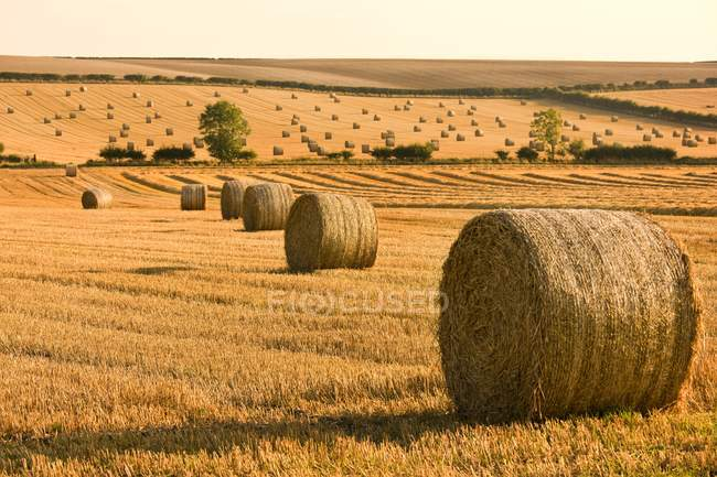Rural scene of Hay Bales — Stock Photo