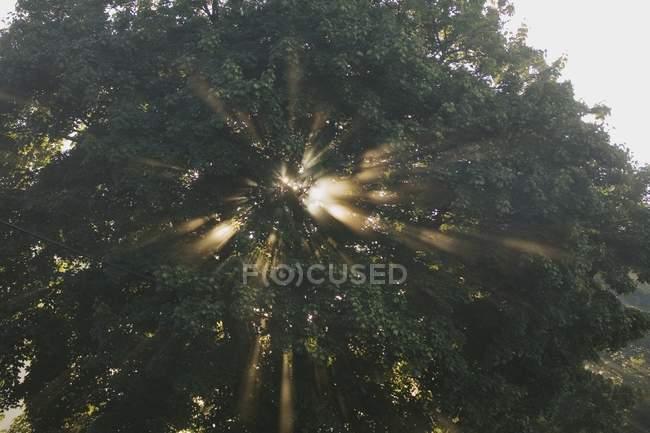 La luz del sol a través de árboles - foto de stock