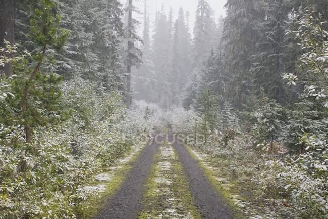 Strada della ghiaia in foresta — Foto stock