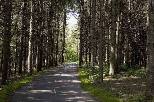 Strada nel bosco circondato durante il giorno — Foto stock