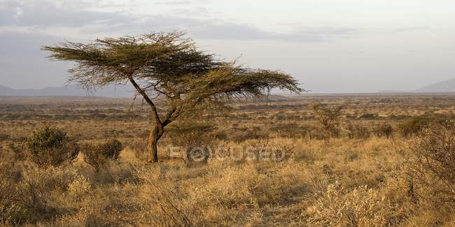 Samburu National Reserve, Kenya — Foto stock