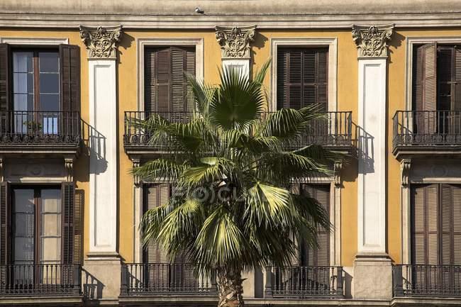 Palma contro edificio — Foto stock