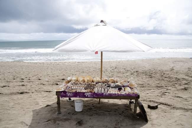 Indonésie ; Tableau avec affichage de coquille — Photo de stock