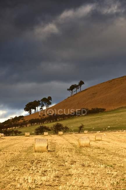Fardos de feno em um campo — Fotografia de Stock