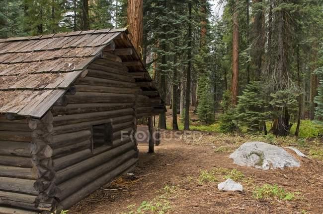 Національний парк Секвойя, Каліфорнія — стокове фото