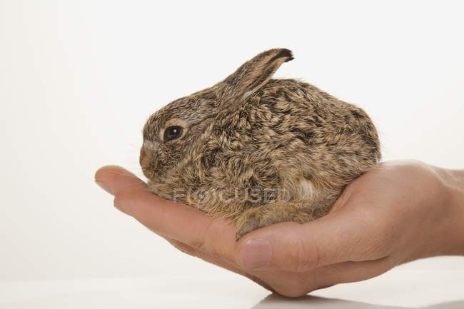 Hand holding cute Rabbit — Stock Photo