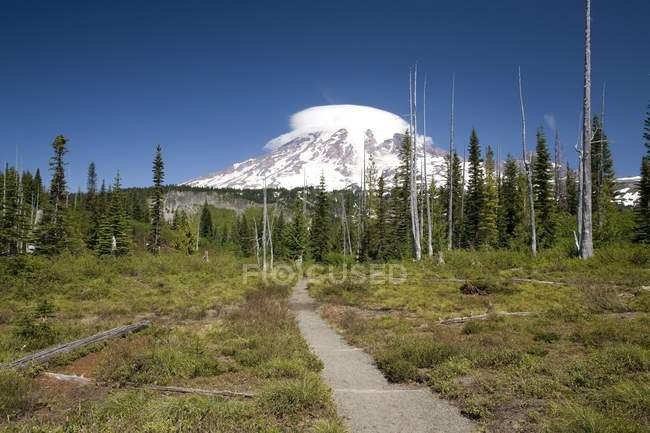 Mount rainier, parco nazionale di mount rainier — Foto stock
