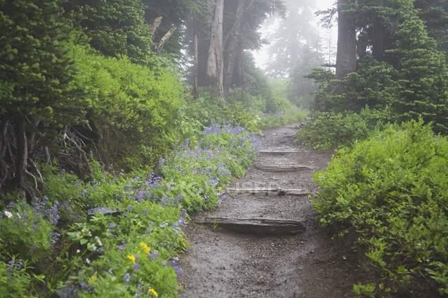 Percorso di foresta nebbioso — Foto stock