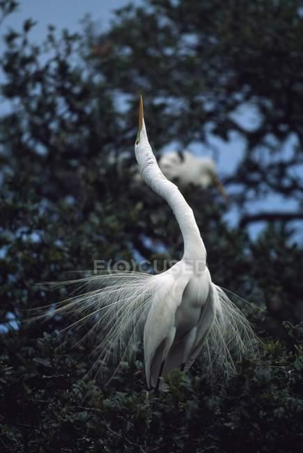 Airone che si siede sull'albero — Foto stock