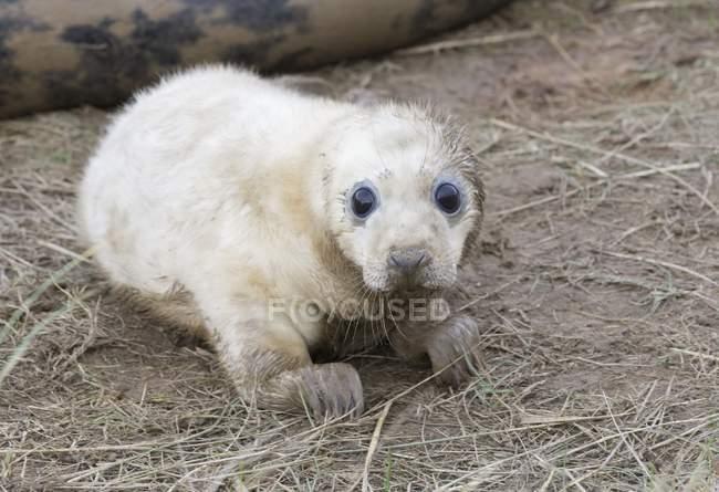 Telecamera dall'aspetto grigio Seal — Foto stock