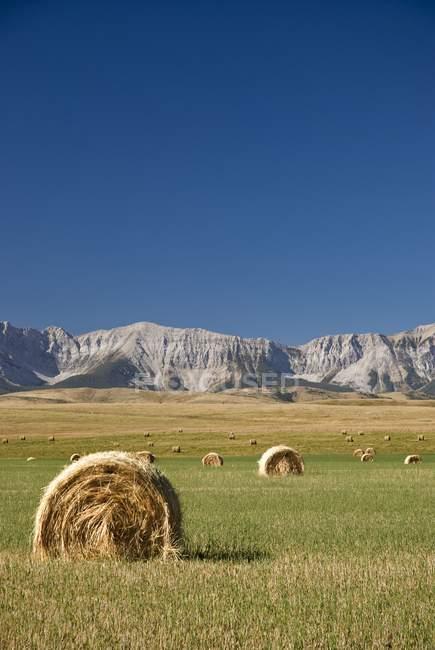 Southern Alberta, Canada — Stock Photo