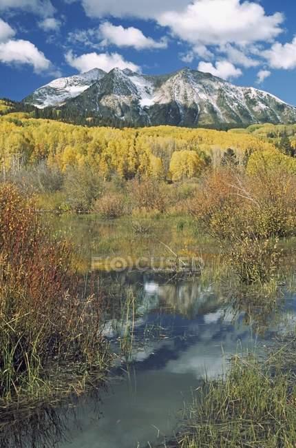 Biber Teich spiegelt Herbst Aspen Stand — Stockfoto