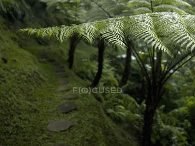 Папороті ростуть в лісі — стокове фото