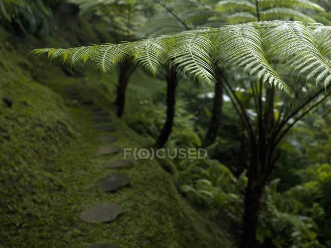 Ferns growing in forest — Stock Photo