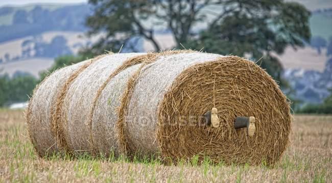 Сапоги, вырывающиеся из сенокосов — стоковое фото
