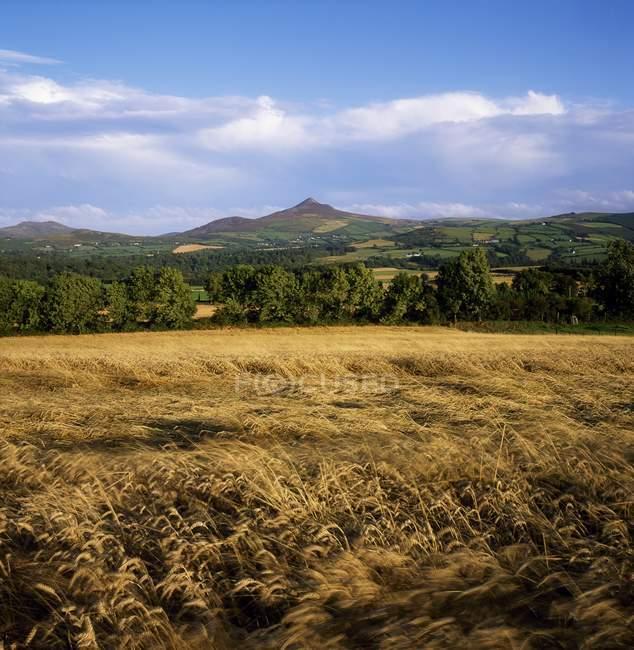 Sugarloaf, contea di Wicklow, Irlanda — Foto stock