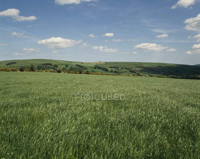 Field Near Carnew, Ирландия — стоковое фото
