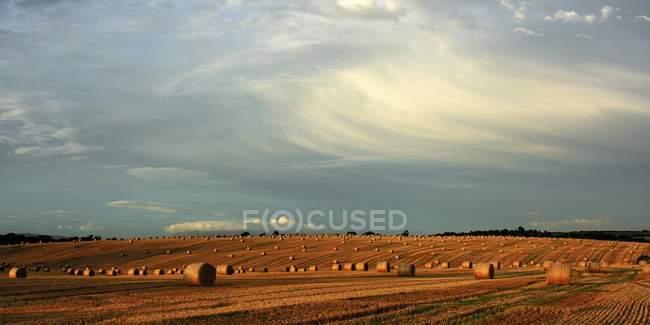 Balles de foin après la récolte — Photo de stock