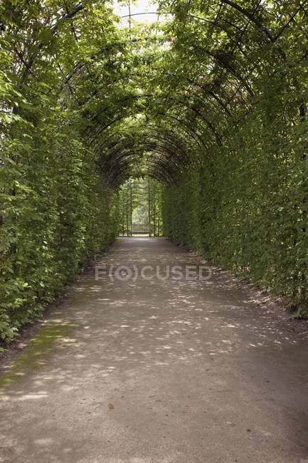 Garden Path surrounded by arch — Stock Photo