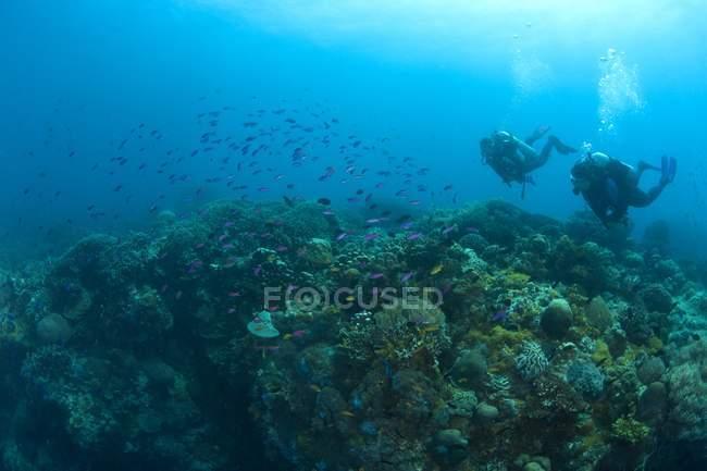 Живописный вид подводного плавания под водой с рыбами — стоковое фото