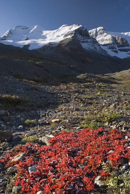 Mount Athabasca, Columbia Icefield — Stock Photo