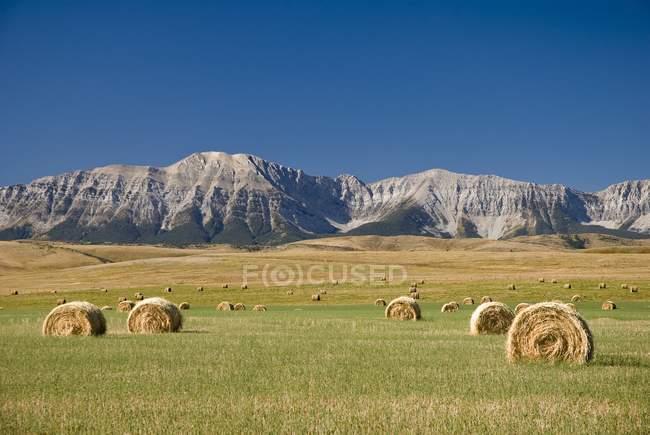 Campo de balas de heno, Alberta - foto de stock