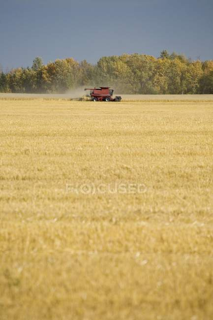 Combine Harvesting Field — Stock Photo