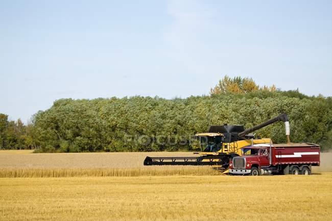 Kombinieren Sie ernten Weizenfeld — Stockfoto
