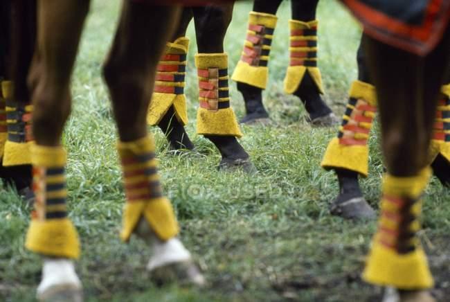 Protection sur les jambes de chevaux — Photo de stock