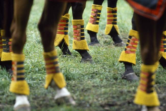 Protection On Horses Legs — Stock Photo