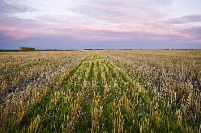 Scena rurale di campo raccolto — Foto stock