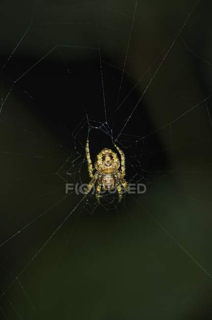 Orb Spider Web — Photo de stock