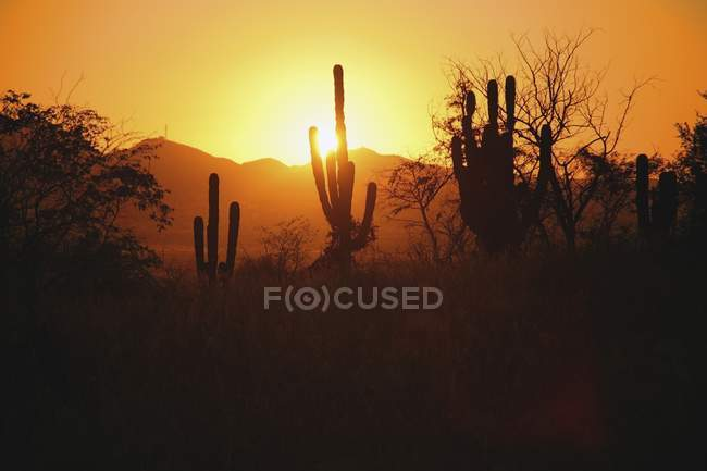 Sunset With Cactus Silhouette — Stock Photo