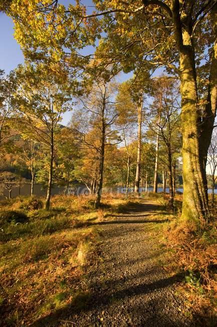 Trail durch Bäume mit Herbstfarben — Stockfoto