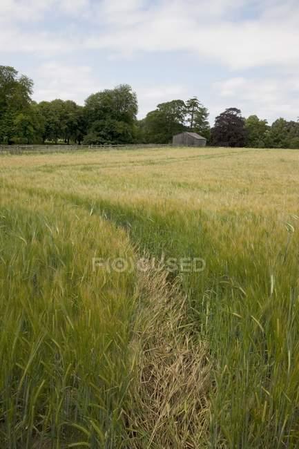 Rastrear através do campo, Northumberland — Fotografia de Stock