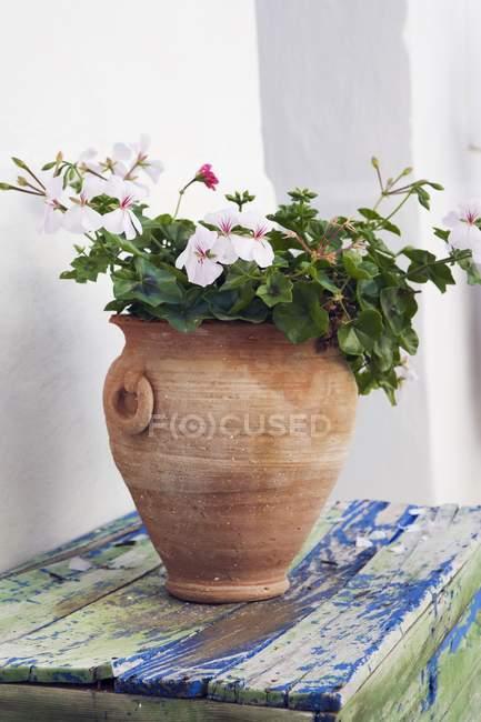 Горшок с цветами — стоковое фото