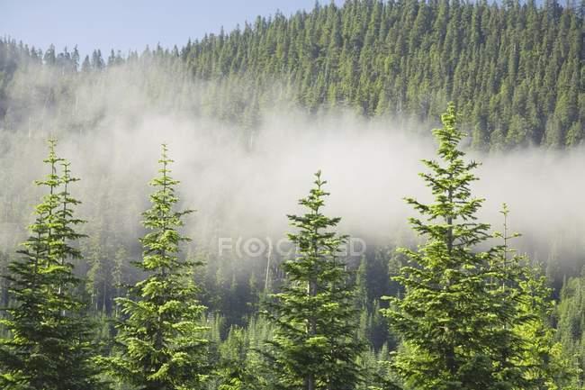 Туманні лісу в горах — стокове фото