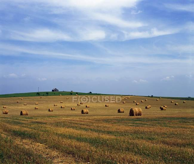 Field Of Hay Bales, Texas — Stock Photo