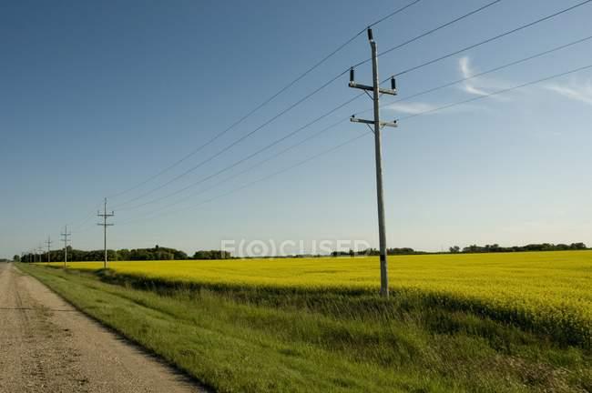 Lignes électriques sur herbe verte — Photo de stock
