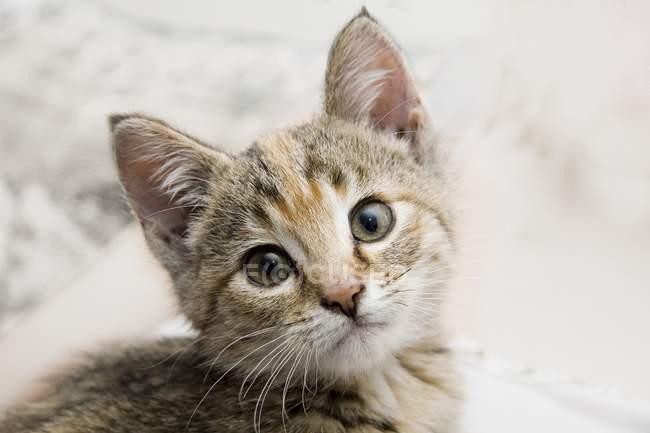 Gatto domestico in cerca di fotocamera — Foto stock