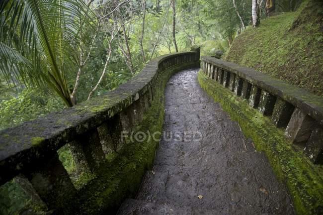 Avvolgimento sentiero attraverso la foresta — Foto stock