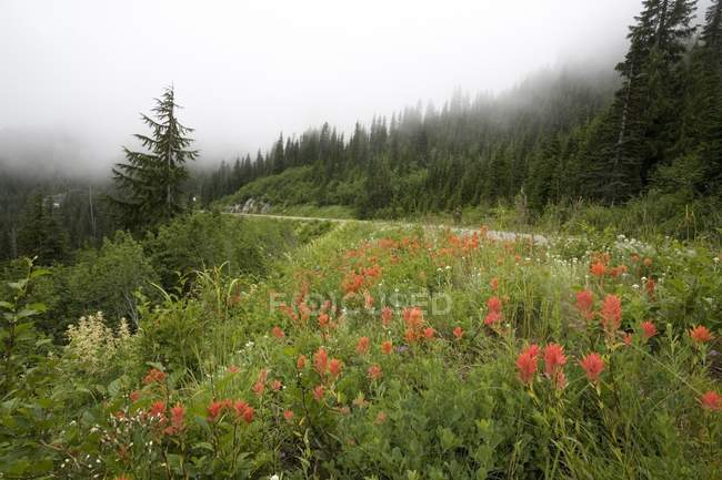 Red Flowers On Side Of Mountain — Stock Photo