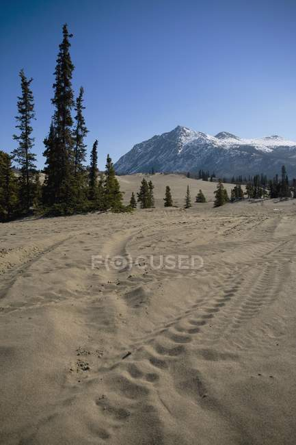 Carcross Desert, Carcross — Stock Photo