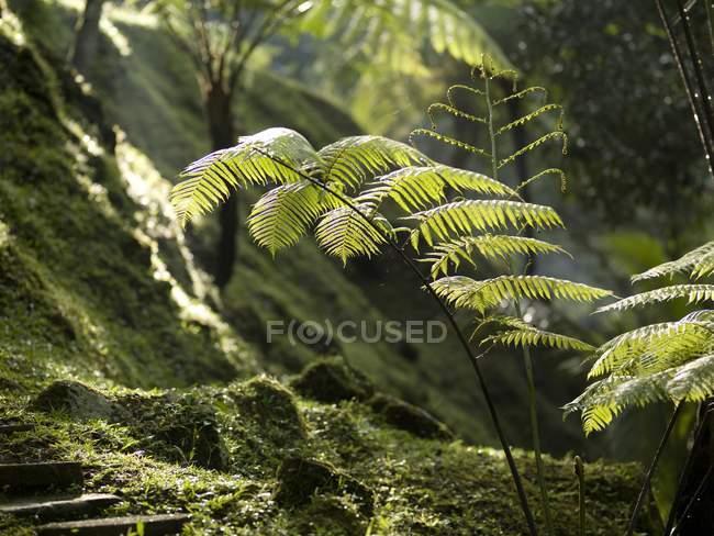 Крупним планом в Ліс папороті — стокове фото
