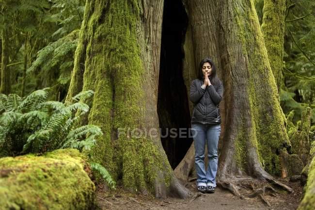 Жінка медитації, Дуглас-ялина. Макміллан Провінційний парк, Ванкувер, Канада — стокове фото