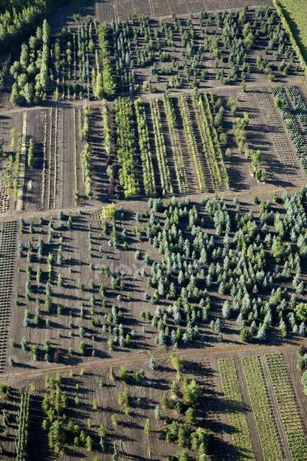 Aerial View Of Tree Farm — Stock Photo