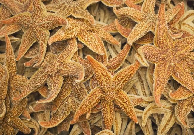 Dried Starfish On A Street Market — Stock Photo