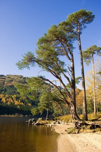 Ufer des Sees mit Bäumen — Stockfoto